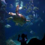 Zoos & Aquariums: More than Meets the Eye